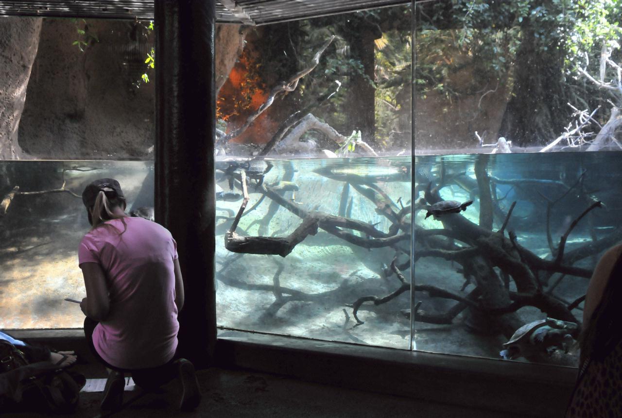 Bcx News San Diego Zoo